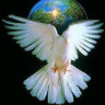 Porumbelul stralucitor